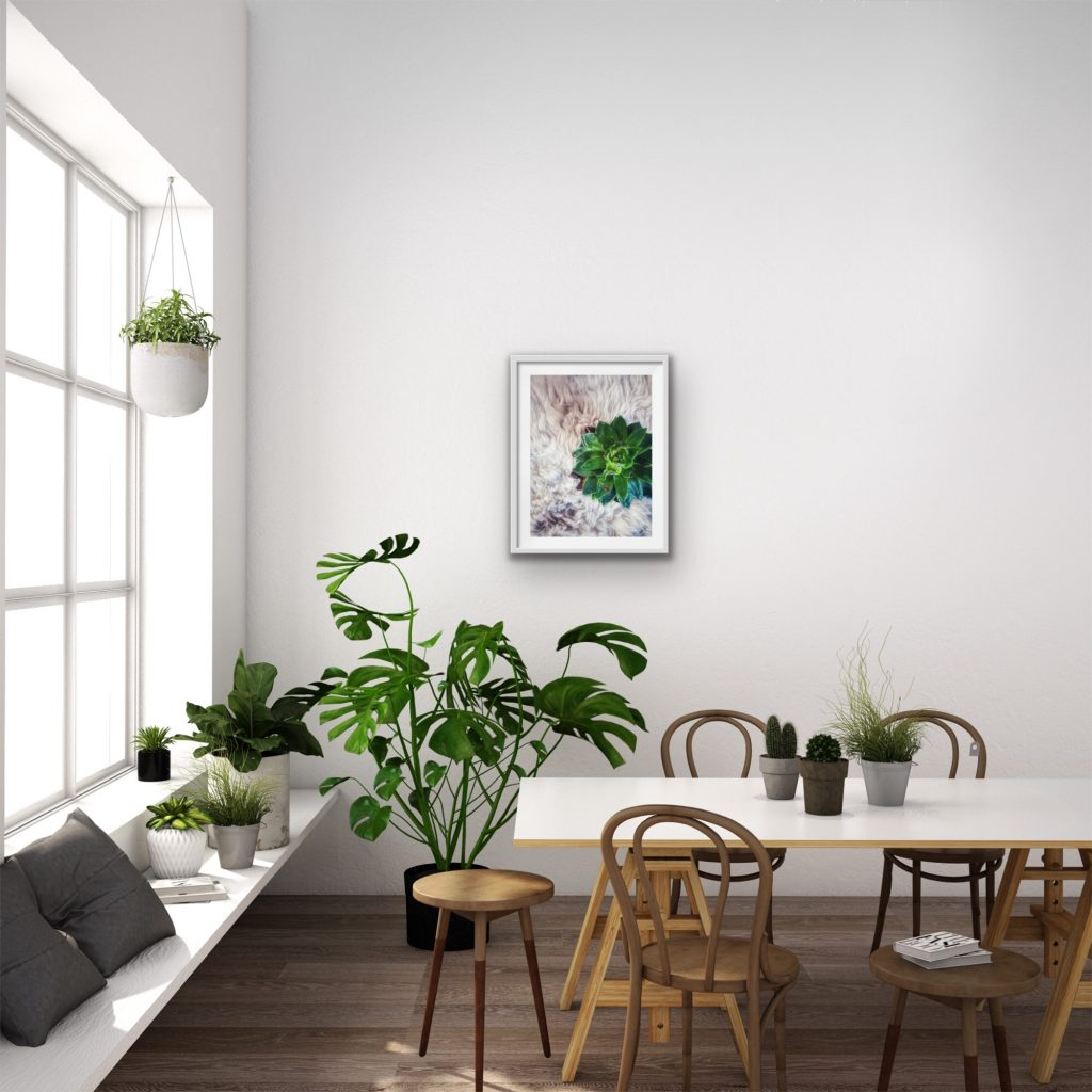 advantage of indoor plants to your room and health