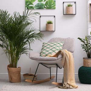 The Advantages Of Indoor Plants To Your Home And Health