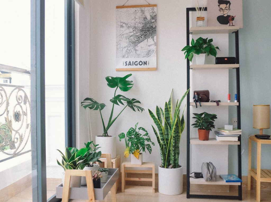 plants in a room