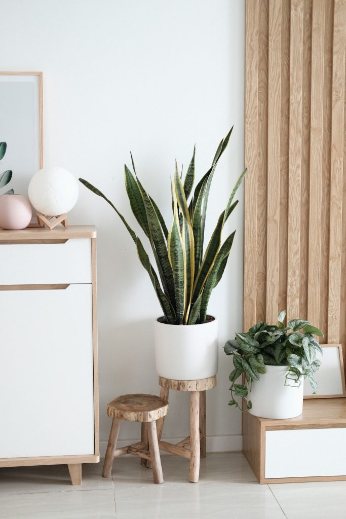 Advantages of indoor plants to your home and health